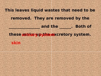 Urinary System PowerPoint