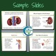 Urinary System PowerPoint and Notes