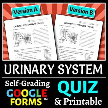 Urinary System Printable & Worksheets | Teachers Pay Teachers