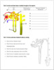 Urinary System Review Worksheet