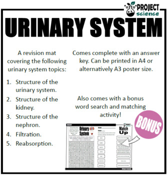Urinary System Revision Mat