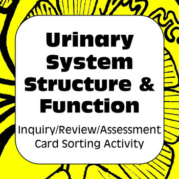 Urinary System Structure & Function Card Sort & Assessment For High School