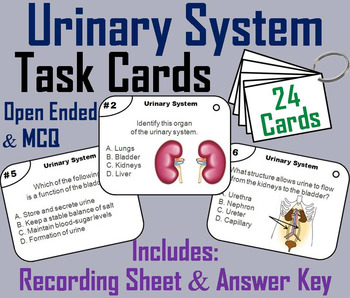 Urinary System Task Cards  (Human Body Systems Task Cards)