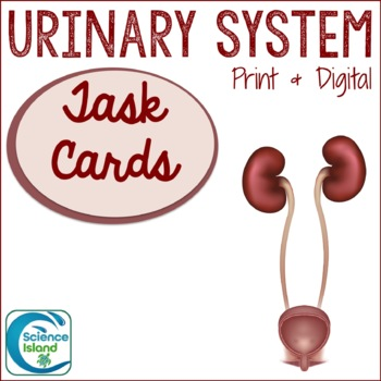 Urinary System Task Cards with PowerPoint Review