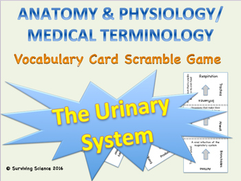 Urinary System Vocabulary Scramble Game: Anatomy & Medical