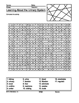 Urinary System Word Search Printable
