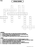 Urinary System Worksheet/ Crossword Puzzle