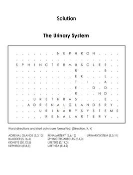 Human Body Systems Word Search: Urinary System Worksheet