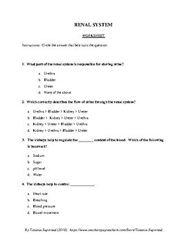 Urinary System in Humans - WORKSHEET