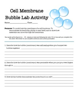 Using Bubbles to Model a Cell Membrane