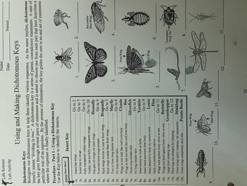 Using an Insect Dichotomous Key