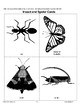 Using Insect and Spider Picture Cards