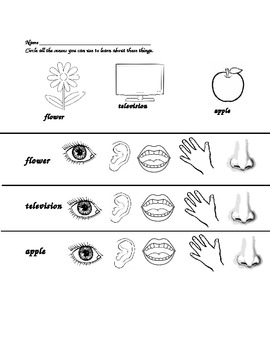 Using Our Senses