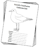 Utah State Bird Notebooking Set (California Gull)
