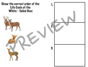 VA SOL 2.4 - Life Cycle of the White Tailed Deer