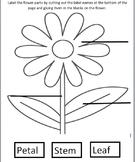 VAAP-Flower parts