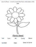 VAAP-Plant Needs and Flower Parts