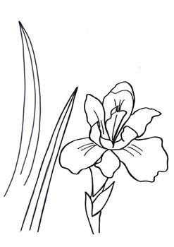 "VAN GOGH ""Iris"", art project"