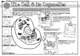 VCE BIOLOGY DOODLE NOTES: The Cell & its Organelles