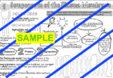 VCE Biology Doodle Note Series. 001: Components of the Pla