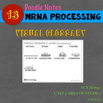 VCE Biology Doodle Note Series. 013: mRNA Processing