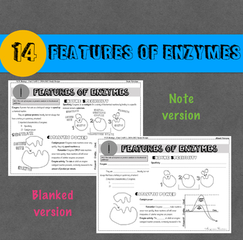 VCE Biology Doodle Note Series. 014: Features of Enzymes