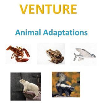VENTURE;  Animal Adaptations