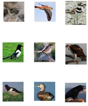 VENTURE: Birds 1