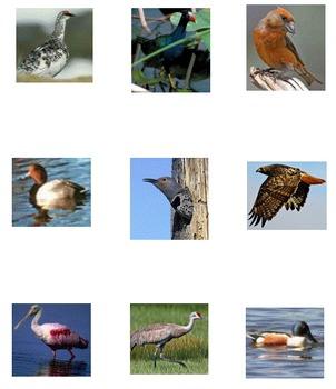VENTURE: Birds 3