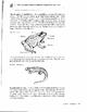 VERTEBRATE PRACTICE PAGES & REVIEWS