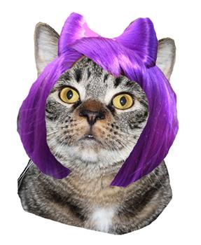 Online ESL Teaching - Cat Wig Activity Reward Prop - Seriously Funny VIPKID