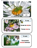 Online ESL VIPKID Level 5 Insects Pictures and Vocabulary