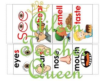 (NON-INTERACTIVE)VIPKID L2-U7 Senses Sentence Frame Sliders