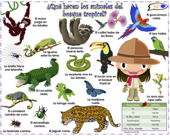 VISUAL AID/POSTER - Animals of the Rainforest! (Use digitally or as a poster.)