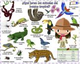 VISUAL AID/POSTER - Animals of the Rainforest! (Use digita