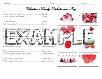 Valentine's Candy Dichotomous Key