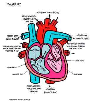 Valentines day human heart activity 5th 6th 7th 8th coloring sheet & Bill Nye