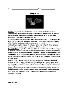 Vampire Bat - Review Article Questions Vocabulary Word Search Information Facts