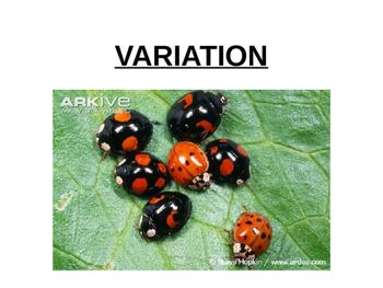 Variation and Variation Graphs ppt