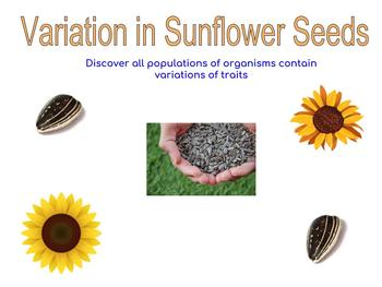Variation in Sunflower Seeds