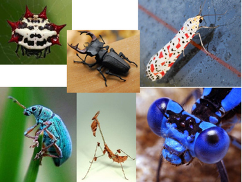 Variety of Bugs