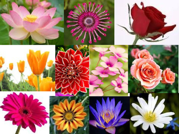 Variety Of Flowers By Art Star Teachers Pay Teachers