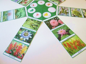 Various Plants of the continents cards