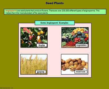 Vascular Plants -  A Fifth Grade PowerPoint Introduction