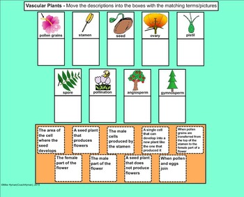 Vascular Plants - A Fifth Grade SMARTBoard Introduction
