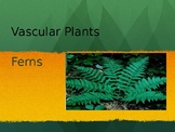 Vascular Plants - Ferns, Club mosses, and Horsetail PPT