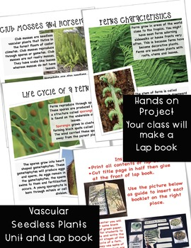 Vascular Seedless Plants Unit and Lap Book