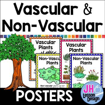 Vascular and Non Vascular Plants Posters