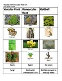 Vascular and Nonvascular Plant Sort