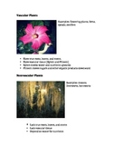 Vascular and Nonvascular Plants Simple Summary